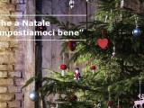 Affittare una picea presso IKEA per il Natale 2013